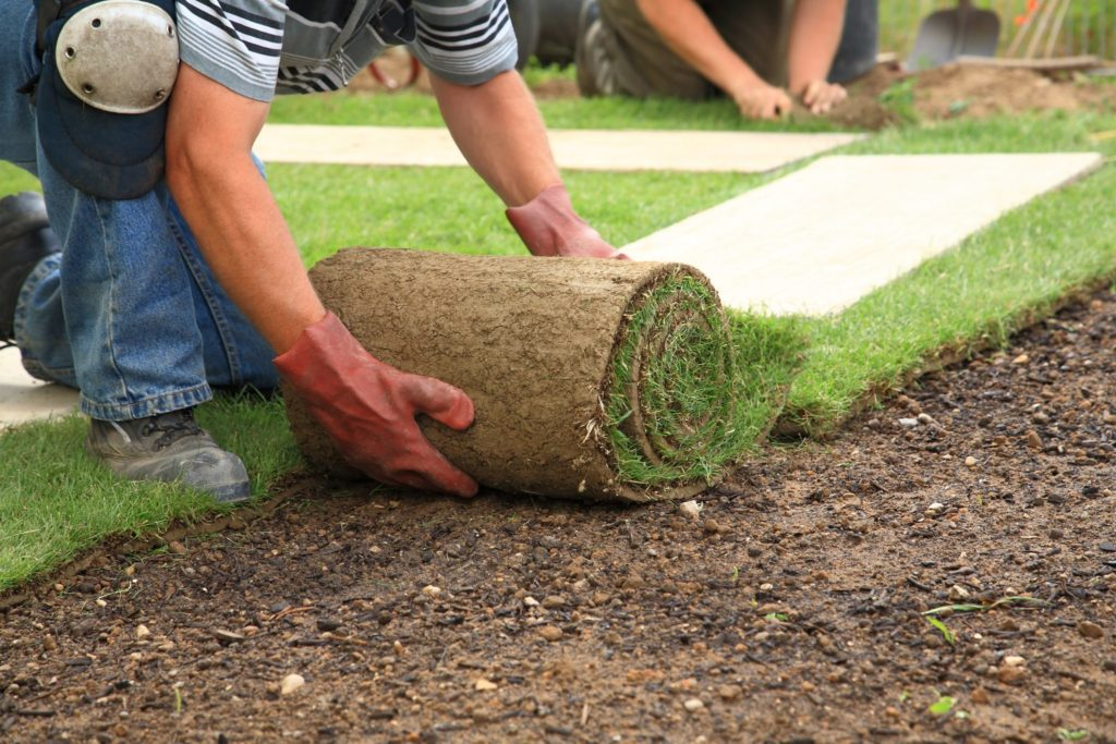 Person laying down new grass.